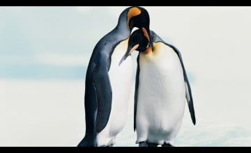 Penguin Wallpaper Love