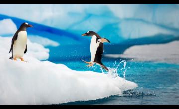 Penguins Desktop Wallpaper