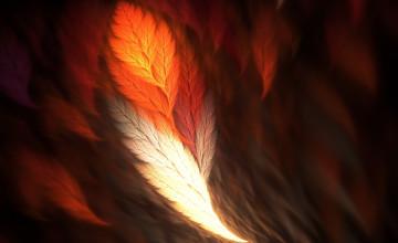 Phoenix Feather Wallpaper