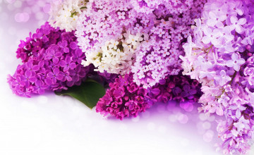 Pink And Purple Flower Backgrounds