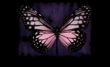 Pink Butterfly Wallpaper