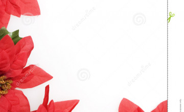 Poinsettia Backgrounds