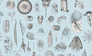 Protozoa Wallpaper