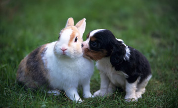 Puppy And Rabbit Wallpapers