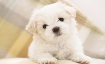 Puppy Images Wallpapers