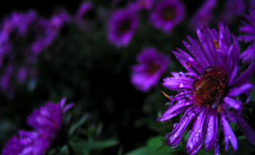 Purple Flower Desktop Wallpaper