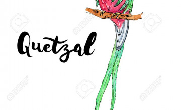Quetzal Background