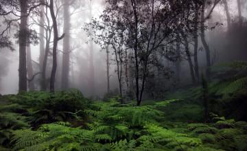 Raining Forest Wallpaper