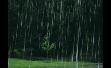 Raining Live Wallpaper