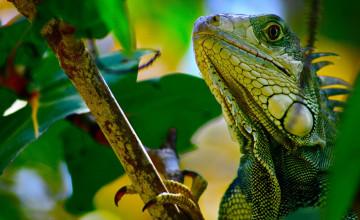 Reptile HD Wallpaper
