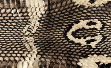 Reptile Skin Wallpaper