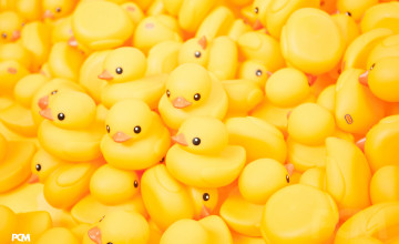 Rubber Duck Wallpaper
