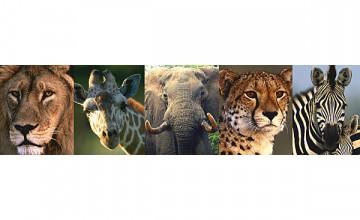 Safari Wallpaper Border