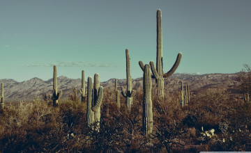Saguaro National Park Wallpapers