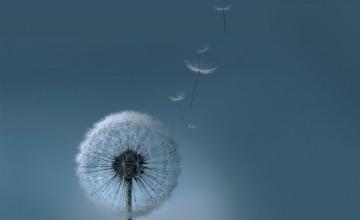 Samsung Dandelion Wallpaper