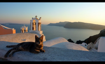 Santorini Cats Wallpaper