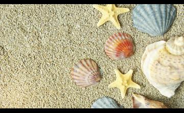 Seashell Wallpaper for Walls