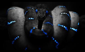 Snake Wallpapers for Desktop