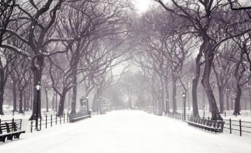 Snow Falling Wallpaper Free Download