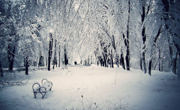 Snowy Winter Scenes Wallpaper