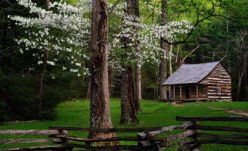 Spring Cabin Wallpaper