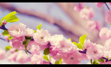 Spring Flower Wallpaper for Desktop