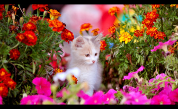 Springtime Animals and Flowers Wallpaper