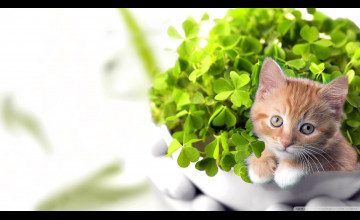 St. Patrick's Day Cats Wallpapers