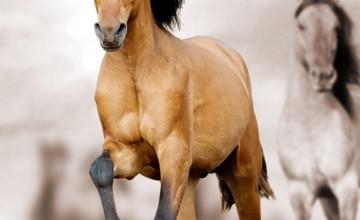 Stallion Backgrounds