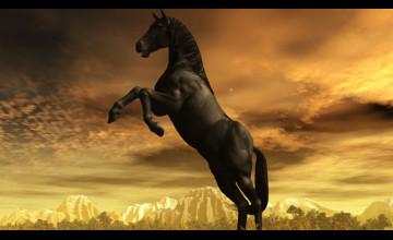 Stallion Wallpaper