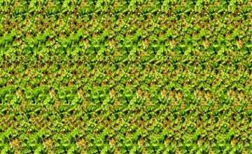 Stereogram Wallpapers