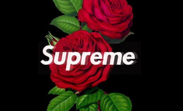 Supreme Rose Wallpapers