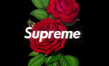 Supreme Rose Wallpapers