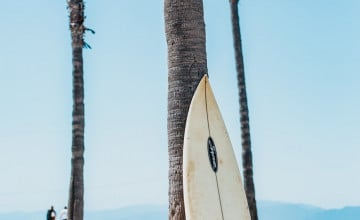 Surfboards Wallpaper