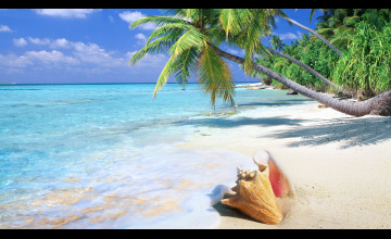Tropical Beach HD Wallpaper