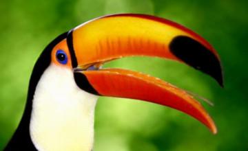 Tropical Bird Wallpaper for Walls