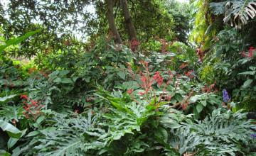 Tropical Plant Wallpaper