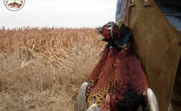 Turkey Hunting Wallpaper for Computer