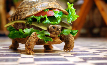 Turtle Burger Wallpaper