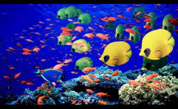 Underwater Coral Reef Wallpaper