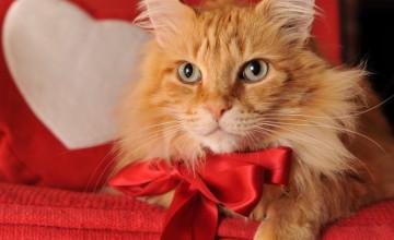 Valentine Kitty Wallpaper