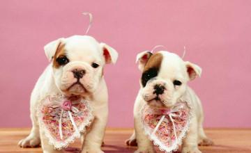 Valentine's Day Dog Wallpaper