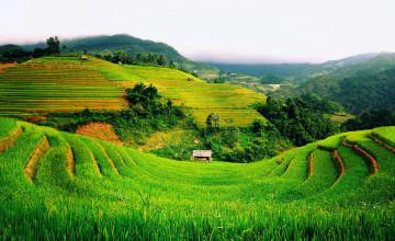 Vietnam Wallpaper Desktop