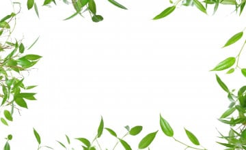 Wallpaper Border with Leaves