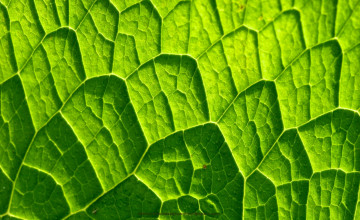 Wallpaper Large Leaf Pattern