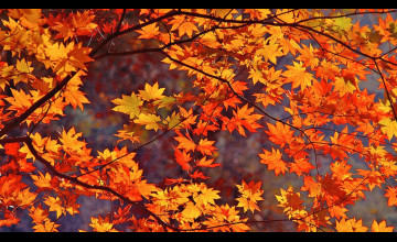 Wallpaper of Fall Leaves