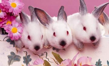 Wallpaper with Bunnies
