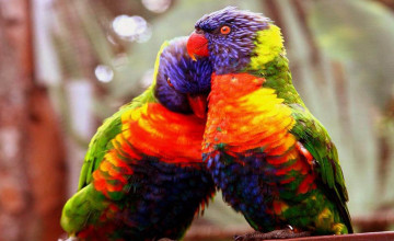 Wallpapers Of Love Birds
