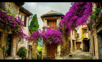 Wallpaper Provence