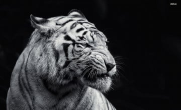 White And Black Animals Wallpapers
